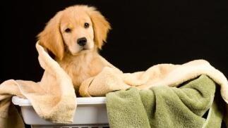 Sesión completa de belleza canina desde 17€