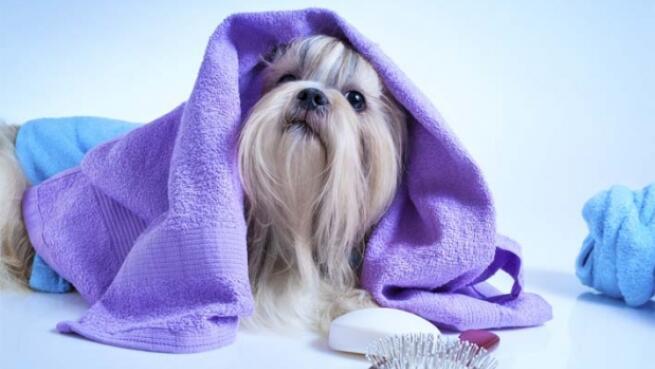 Sesión de peluquería canina por 24,90€